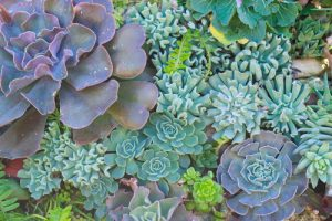 Xeriscaping - Use Succulents as a great alternative.